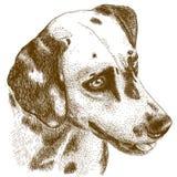 Illustrazione dell'incisione della testa dalmata Immagine Stock Libera da Diritti
