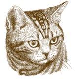 Illustrazione dell'incisione della testa del gatto Immagini Stock Libere da Diritti