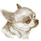 Illustrazione dell'incisione della testa della chihuahua Fotografie Stock