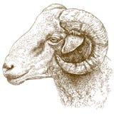 Illustrazione dell'incisione della testa della ram Immagini Stock