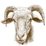 Illustrazione dell'incisione della testa delle ram Immagini Stock Libere da Diritti