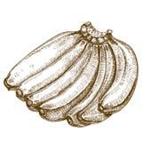 Illustrazione dell'incisione delle banane Fotografia Stock Libera da Diritti
