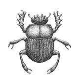 Illustrazione dell'incisione dello scarabeo Immagine Stock Libera da Diritti
