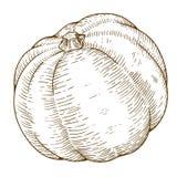 Illustrazione dell'incisione di grande zucca Immagine Stock