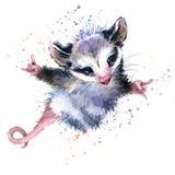 Illustrazione dell'opossum dell'acquerello progettazione sveglia della maglietta di modo Immagine Stock