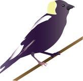 Illustrazione dell'uccello Fotografia Stock