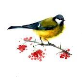 Illustrazione dell'uccello dell'acquerello Fotografia Stock Libera da Diritti