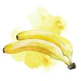Illustrazione della banana dell'acquerello Fotografia Stock Libera da Diritti