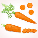 Illustrazione della carota illustrazione di stock
