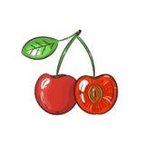 Illustrazione della ciliegia di vettore su fondo bianco Fotografia Stock Libera da Diritti
