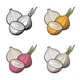 Illustrazione della cipolla Immagini Stock