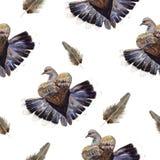 Illustrazione della colomba Fotografia Stock