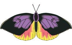 Illustrazione della farfalla di California Dogface illustrazione di stock