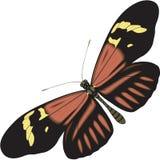Illustrazione della farfalla di Heliconius illustrazione vettoriale