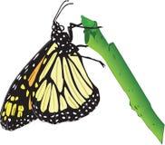 Illustrazione della farfalla di monarca illustrazione di stock
