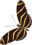 Illustrazione della farfalla della zebra royalty illustrazione gratis