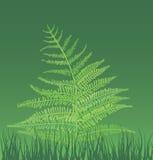 illustrazione della felce-pianta Immagine Stock Libera da Diritti