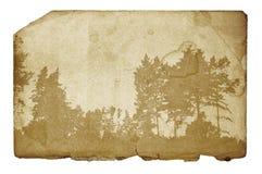Illustrazione della foresta sulla priorità bassa del grunge Immagine Stock Libera da Diritti