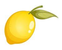 Illustrazione della frutta illustrazione di stock