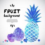 Illustrazione della frutta dell'acquerello di vettore Fotografia Stock Libera da Diritti