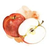 Illustrazione della mela dell'acquerello Fotografia Stock Libera da Diritti