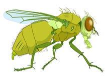 Illustrazione della mosca isolata su bianco Fotografia Stock