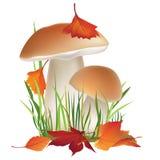 Illustrazione della natura. Fungo in erba con le foglie di caduta isolate su fondo bianco. royalty illustrazione gratis