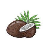 Illustrazione della noce di cocco di vettore su fondo bianco Immagine Stock Libera da Diritti