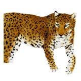 illustrazione della panthera Immagini Stock