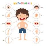 Illustrazione della parte di vocabolario del corpo illustrazione vettoriale