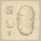 Illustrazione della patata Fotografia Stock Libera da Diritti