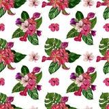 Illustrazione della pittura dell'acquerello di un fondo tropicale Modello tropicale senza cuciture con i fiori esotici immagini stock libere da diritti