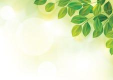 Illustrazione della primavera con le foglie verdi dentro  Immagine Stock