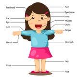 Illustrazione della ragazza con le parti del corpo identificate Fotografie Stock Libere da Diritti