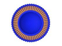 Illustrazione della struttura 3D di Bi-strato del liposoma Fotografia Stock