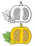 Illustrazione della zucca Immagine Stock Libera da Diritti