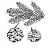 Illustrazione delle conifere su bianco Lo schizzo della pianta sempreverde ha messo - l'abete, cipresso del pino Elementi della d illustrazione di stock
