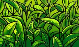 Illustrazione delle foglie di tè ad una piantagione Fotografia Stock