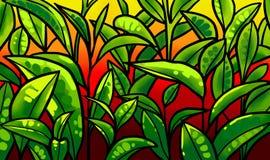 Illustrazione delle foglie di tè ad una piantagione Immagine Stock