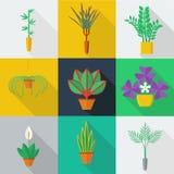 Illustrazione delle piante da appartamento Immagine Stock