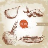 illustrazione delle spezie differenti Chiodo di garofano di aglio, radice dello zenzero, cipolla e peperoncini Fotografia Stock Libera da Diritti