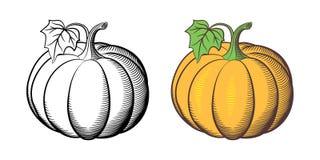 Illustrazione delle zucche Immagine Stock Libera da Diritti