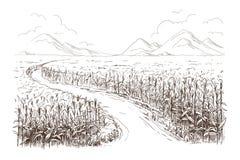 Illustrazione dello schizzo del gambo del grano del campo di mais Immagine Stock Libera da Diritti