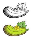 Illustrazione dello zucchini Fotografia Stock