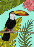 Illustrazione dettagliata del tucano Fotografie Stock Libere da Diritti