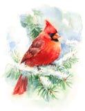 Illustrazione di Bird Watercolor Winter del cardinale dipinta a mano Immagini Stock Libere da Diritti