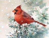 Illustrazione di Bird Watercolor Winter del cardinale disegnata a mano Immagini Stock
