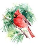 Illustrazione di Bird Watercolor Winter del cardinale disegnata a mano Fotografia Stock Libera da Diritti