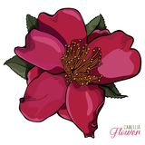 Illustrazione di Camellia Flower Realistic Vector Immagine Stock