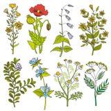 Illustrazione di colore d'annata di vettore dei fiori selvaggi e delle erbe illustrazione vettoriale